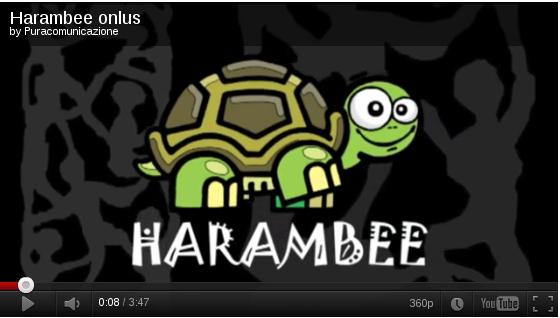 Video presentazione Adotta un progetto con Harambee